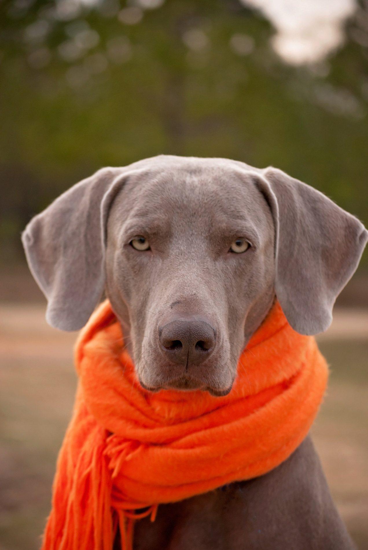 Prävention beim Hund - Hund mit Schal