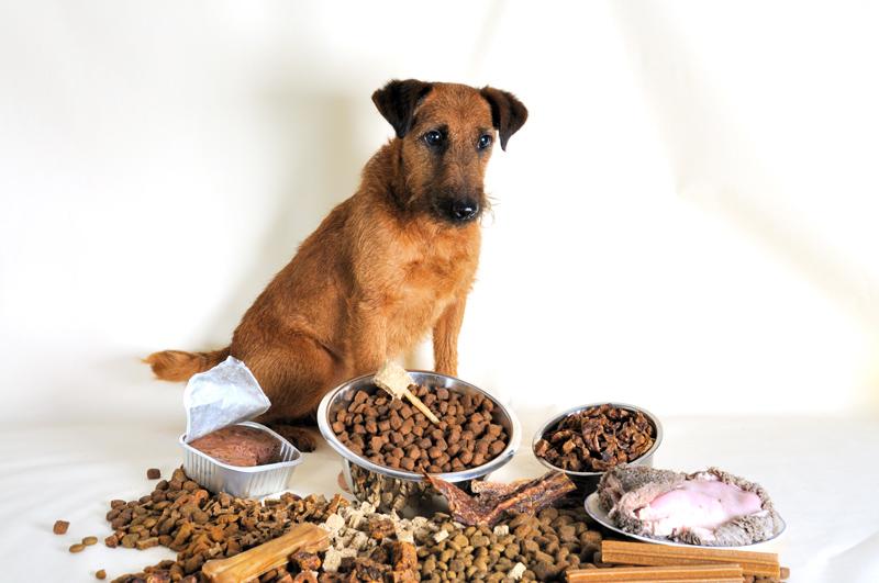Hund vor Auswahl von Futter