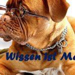 Gutschein Hunde-Seminar
