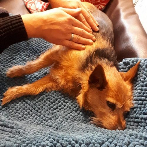 Hund geniesst Massage